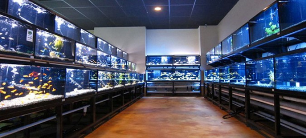 I 39 d rather die than blog about fish blog for i 39 d rather for Fish store houston